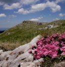 Природен парк Българка чудесно място да отдих и почивка в планината